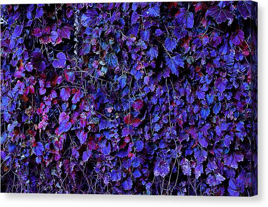 Canvas Print featuring the photograph IVY by Julian Cook