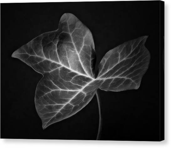 Black And White Flowers Macro Photography Art Work Canvas Print