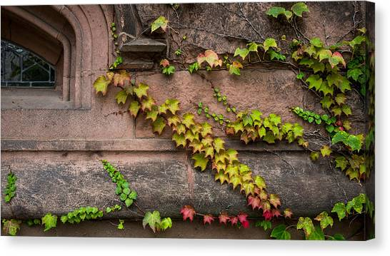 Ivy League Canvas Print