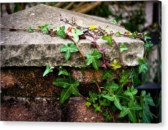 Ivy On Stone Canvas Print