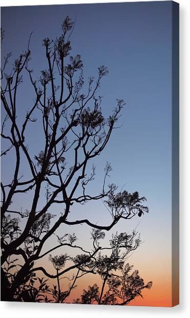 Jacaranda Sunset Canvas Print