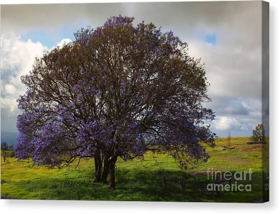 Lavendar Canvas Print - Jacaranda Tree by Mike  Dawson