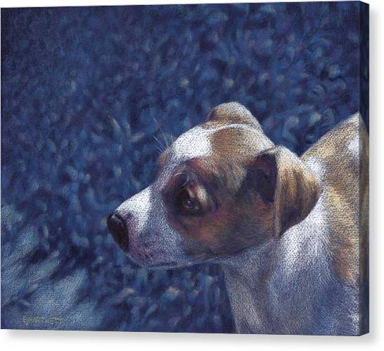Jack Russell Terrier On Blue Canvas Print