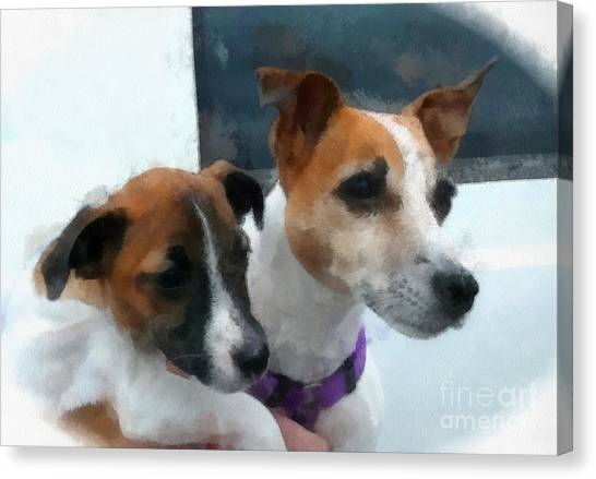 Jack Russells Canvas Print by Betsy Cotton