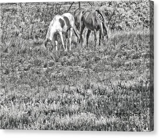 Jack Smokey And Camelot Texas Spring B Canvas Print