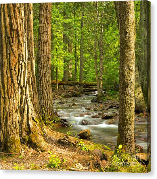 Jackson Creek Canvas Print