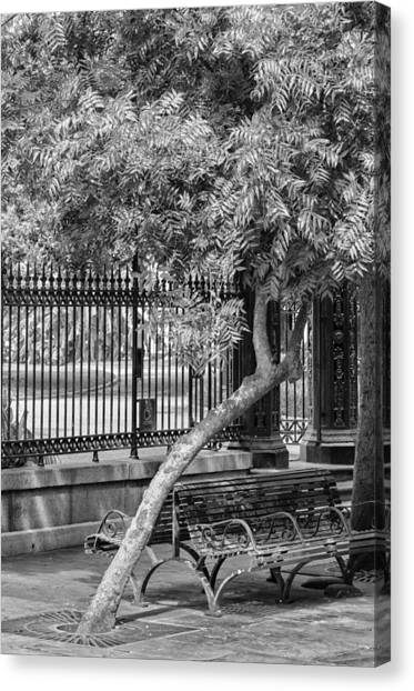 Jackson Square Bench And Tree Canvas Print