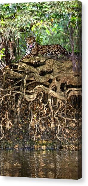 The Pantanal Canvas Print - Jaguar Panthera Onca Resting by Panoramic Images