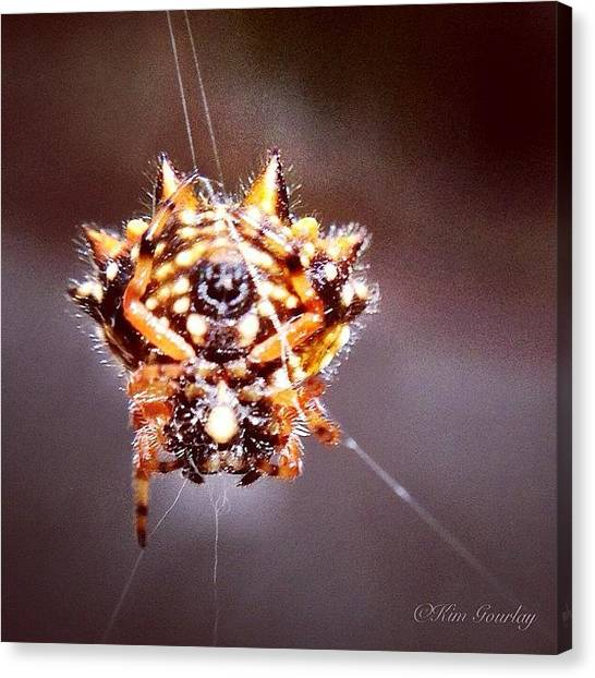 Spider Web Canvas Print - Jan 20. - Something You Saw - This by Kim Gourlay
