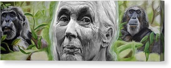 Chimpanzee Canvas Print - Jane Goodall by Simon Kregar