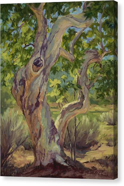 Spring Trees Canvas Print - Spring Sycamore by Jane Thorpe
