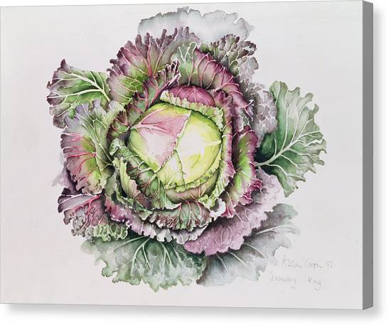 Cabbage Canvas Print - January King Cabbage  by Alison Cooper