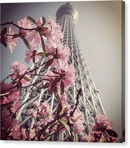 Plus Canvas Print - #japan #tokyo #skytree - #tokyoskytree by Kenichi Iwai