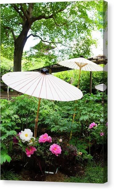 Japanese Garden With Pione Canvas Print by Olgaza