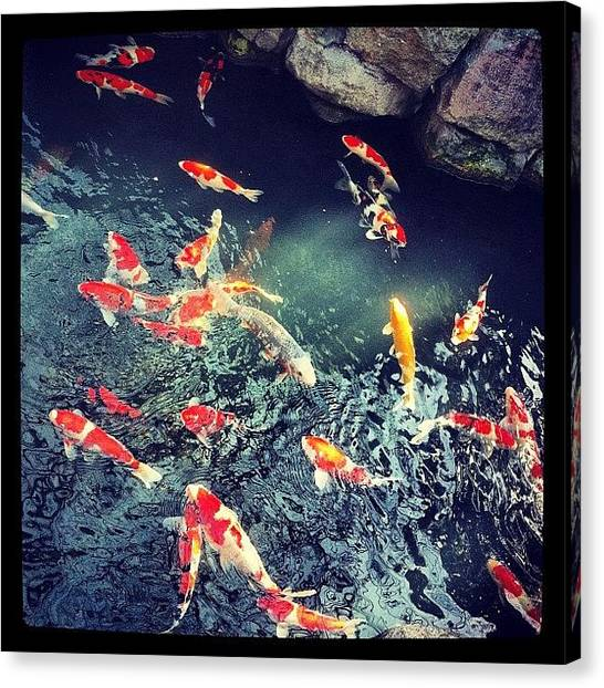 Koi Canvas Print - Japanese Koi Carp #river #fish #orange by Rom Tuohey