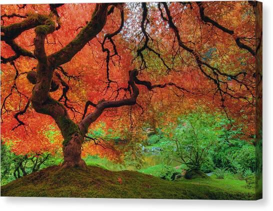 Japanese Maple Tree In Autumn Canvas Print