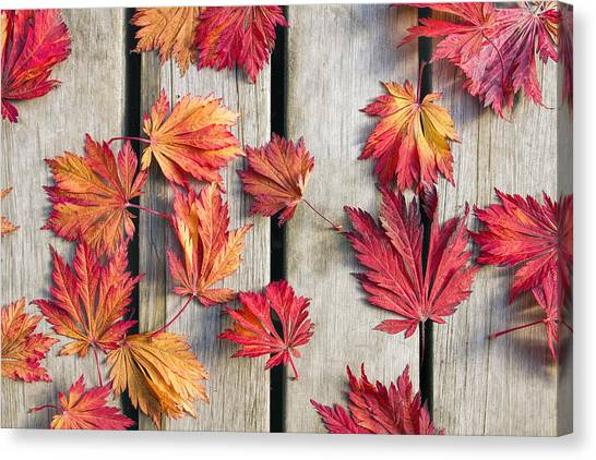 Orange Canvas Print - Japanese Maple Tree Leaves On Wood Deck by David Gn