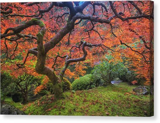Japanese Garden Canvas Print - Japanese Maple Tree by Mark Kiver