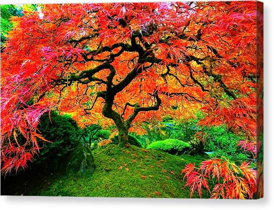 Japanese Red Maple Canvas Print