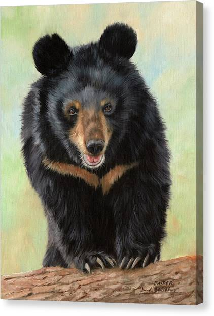 Black Bears Canvas Print - Jasper Moon Bear - In Support Of Animals Asia by David Stribbling