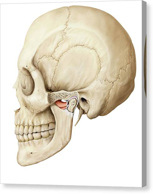 Upper Jaw Canvas Prints Page 2 Of 3 Fine Art America
