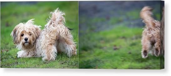 Dog Running Canvas Print - Jax by Rebecca Cozart