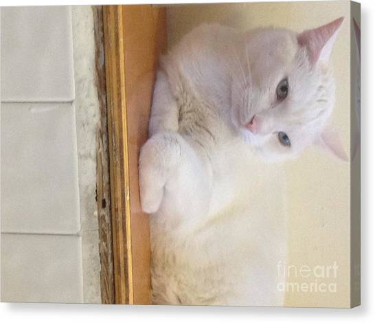 Jay The Cat Canvas Print by Jake Clark