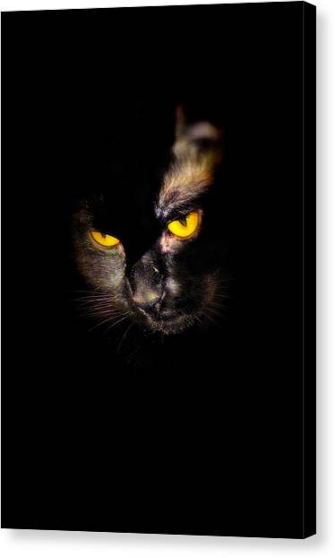 Manx Cats Canvas Print - Jaylene Black Cat by Laura Strain