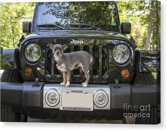 Jeep Canvas Print - Jeep Dog by Edward Fielding
