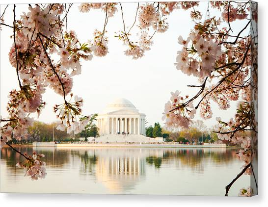 Jefferson Memorial Canvas Print - Jefferson Memorial With Reflection And Cherry Blossoms by Susan Schmitz
