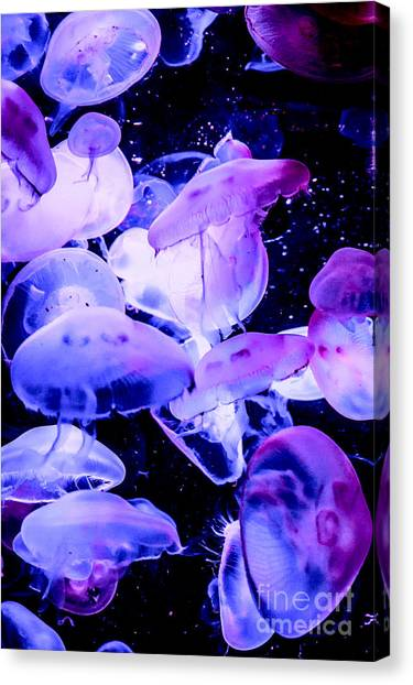 Jelly Time Canvas Print