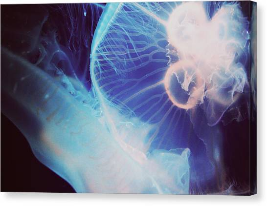 Jellyfish Canvas Print by Claudia Avila