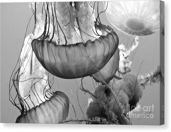 Jellyfish Floating By Canvas Print by Artist and Photographer Laura Wrede