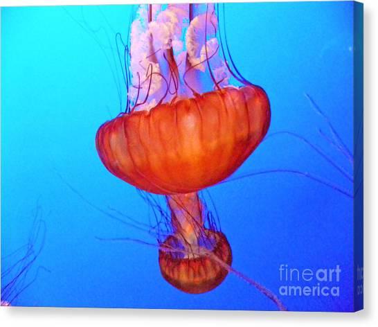 Jellyfish Viii Canvas Print
