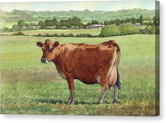 Jersey Cow Canvas Print by Anthony Forster