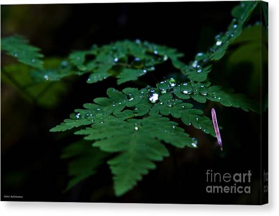 Jeweled Fern Canvas Print by Chris Heitstuman
