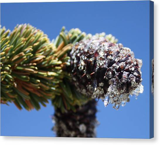 Jeweled Pinecone Canvas Print