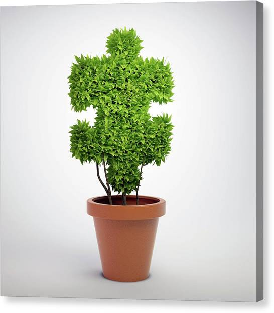 Jigsaw Plant Canvas Print by Andrzej Wojcicki/science Photo Library