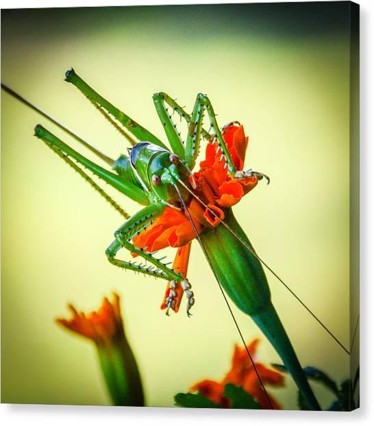 Jiminy Cricket Canvas Print by Wally Taylor