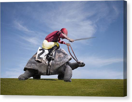 Jockey Over A Turtle Canvas Print by Buena Vista Images