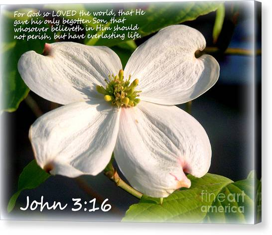 John 3-16/dogwood Legend Canvas Print