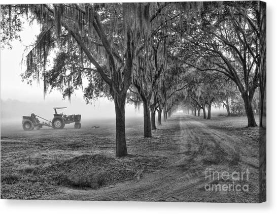 John Deer Tractor And The Avenue Of Oaks Canvas Print