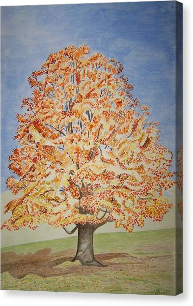 Jolanda's Maple Tree Canvas Print
