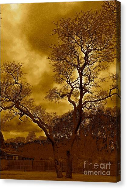 Joshua Tree Canvas Print by Q's House of Art ArtandFinePhotography