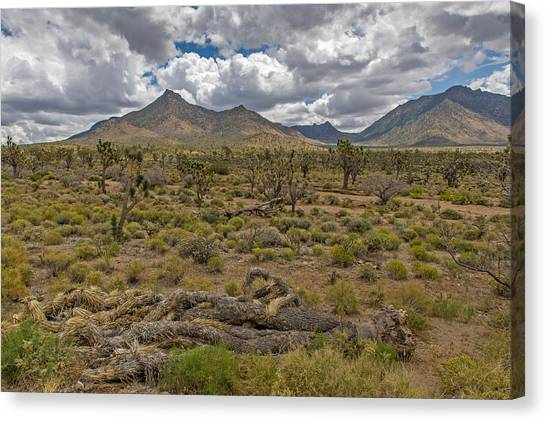 Joshua Tree Forest In Arizona Canvas Print by Willie Harper