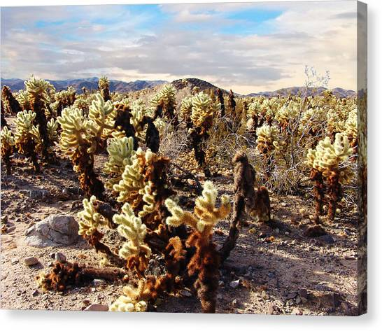 Joshua Tree National Park 3 Canvas Print