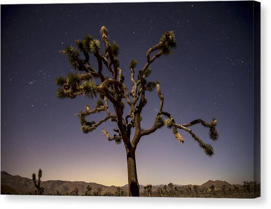 Joshua Tree Night Canvas Print