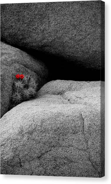 Joshua Tree Np Canvas Print - Joshua Tree Rocks And Flowers Two by Paul Basile