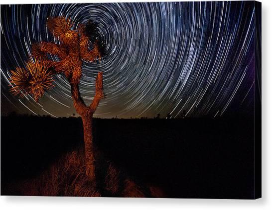 Joshua Tree Np Canvas Print - Joshua Tree Star Trails by Peter Tellone