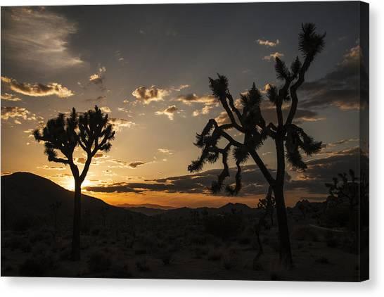 Joshua Tree Sunset Silhouette 2 Canvas Print